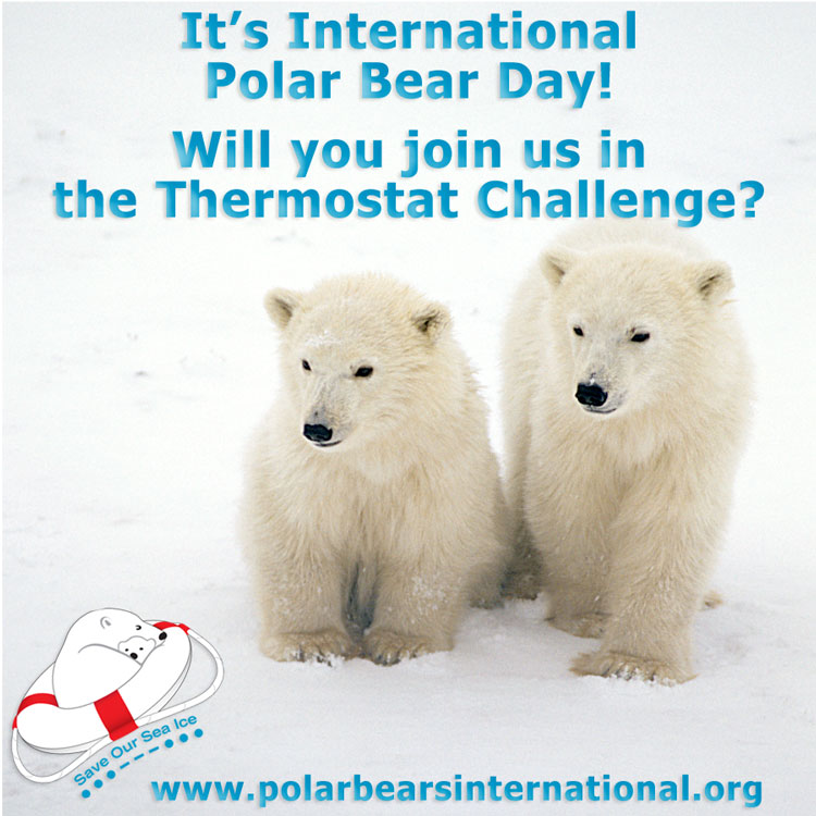 Ourserie.com - Polar Bear Day